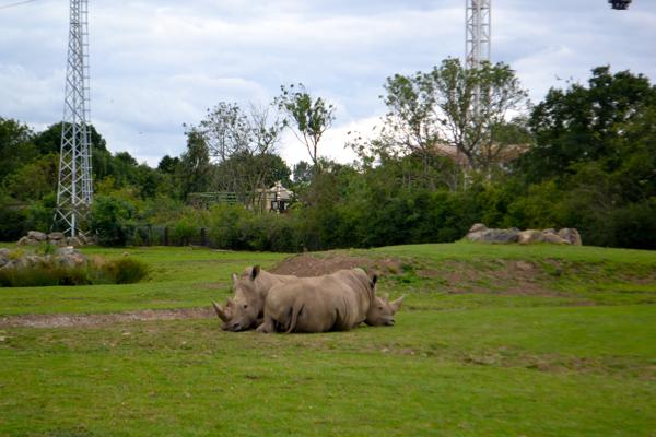 Flamingo Land Zoo rhinos