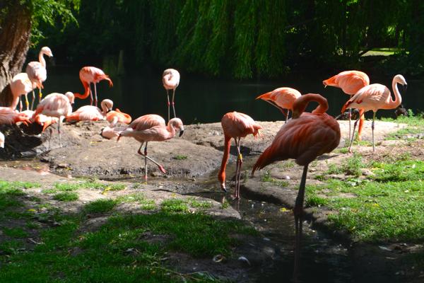 flamingo land zoo flamingo
