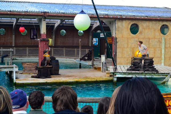 flamingo land zoo sea lion show