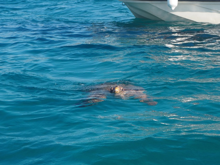Spotting Turtles on Turtle Island Zante