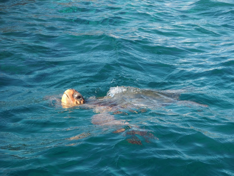 Spotting Turtles on Turtle Island Zante