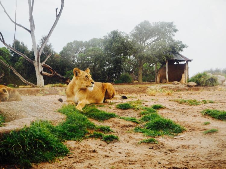 Werribee Zoo, Victoria