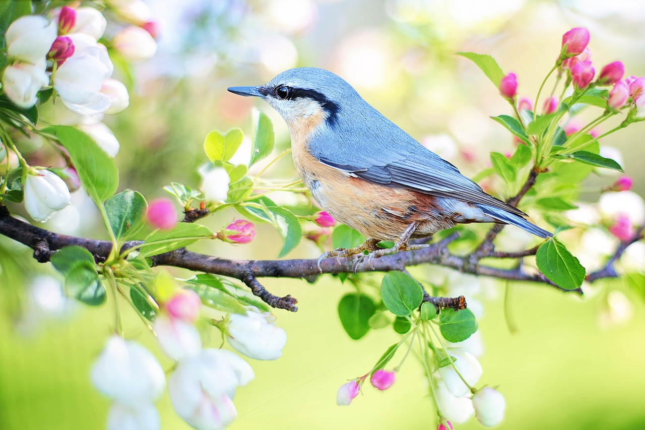Five Tips for Those Looking to Take Up Backyard Birdwatching