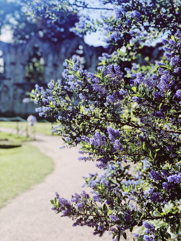 York in Spring