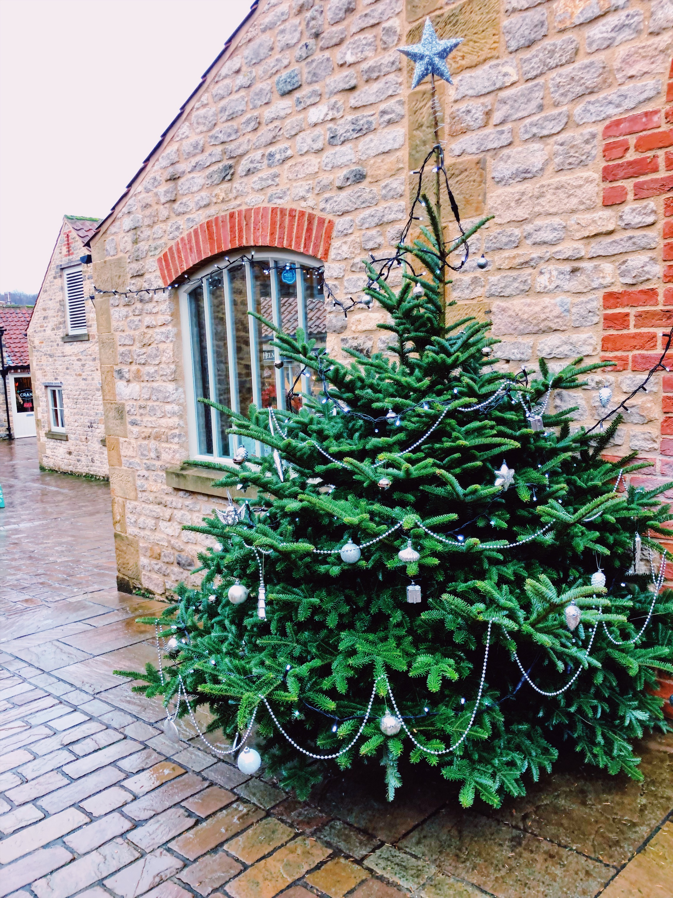 Christmas Trees of Helmsley