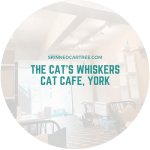 The Cat's Whiskers Cat Cafe, York