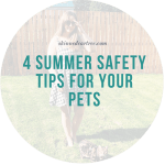 4 Summer Safety Tips for Your Pets